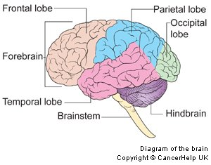 Brain stem archives my brain lesion and me diagram of the brain ccuart Image collections