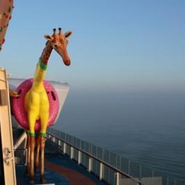 low_1429280110_Girafe