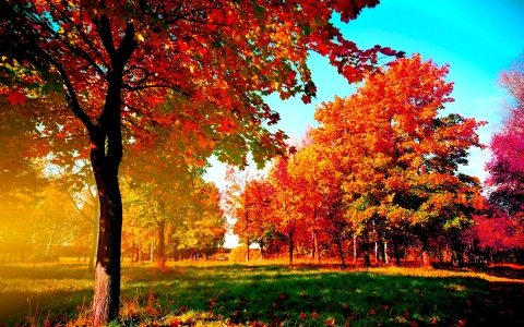 Mindfulness is much like autumn reminding us of the benefits of letting go